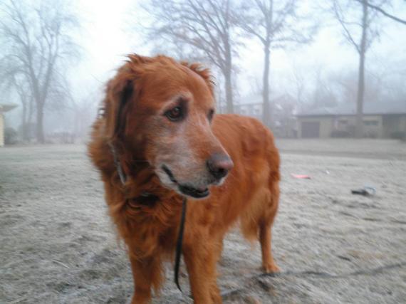 February 2 2012 Foggy ABBA