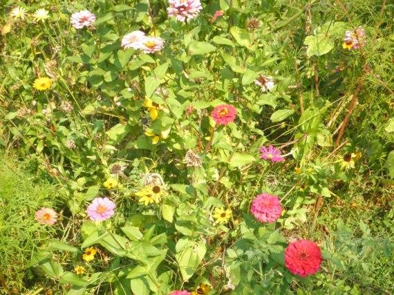 ABBA's Memorial Tomato & Flower Garden September 2012