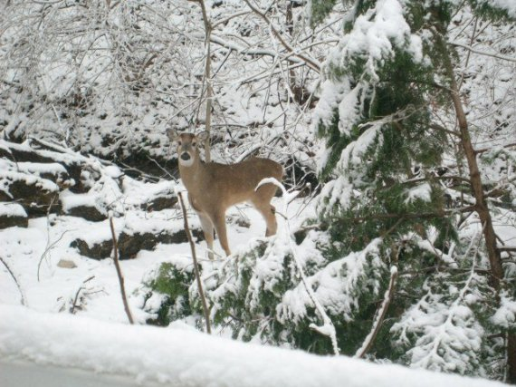Deer 03202010