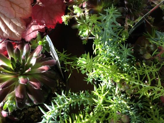 Fort Dodge Plants