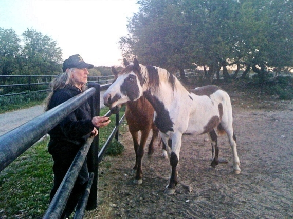 Willie Nelson Horses