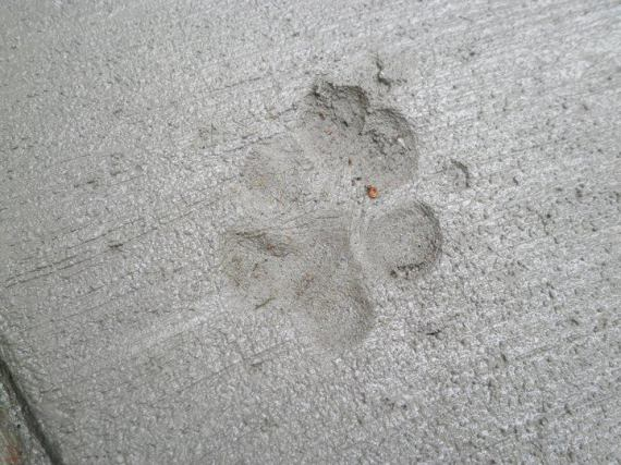 May 25 2011 ABBA Pawprint