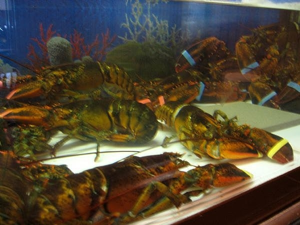 Random friday thoughts january 17 2014 what 39 s peeps for Online fish store