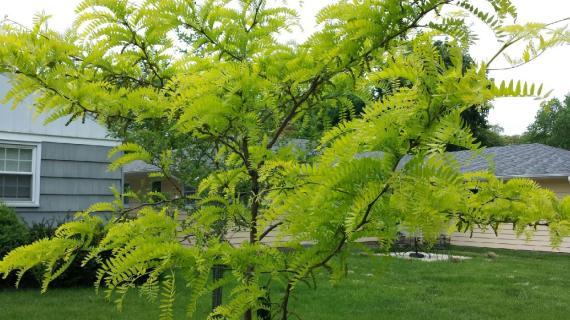 ABBA Tree 2014