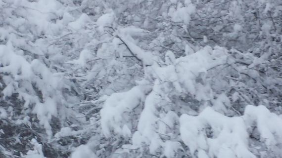 Snowy Moline