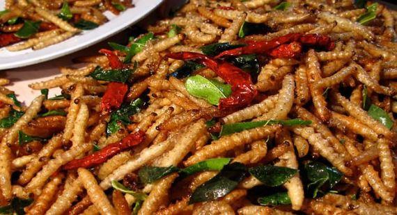 Silkworms.JPG